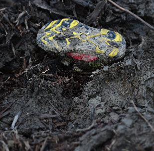 Обувь ребенка в грязи. Архивное фото