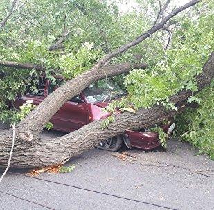 Упавшее на автомобиль дерево, на проспекте Жибек-Жолу в Бишкеке