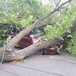 Дерево упало на проспекте Жибек-Жолу в Бишкеке
