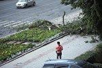 Поваленные деревья в результате сильного ветра в Бишкеке. Архивное фото