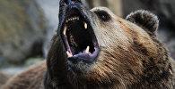 Архивное фото бурого медведя