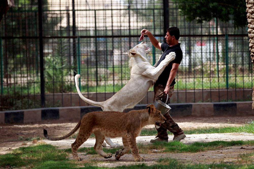 Зоопарк в Багдаде