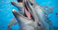 Дельфин. Архивдик сүрөт