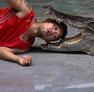 Крокодиловые фермы в Таиланде