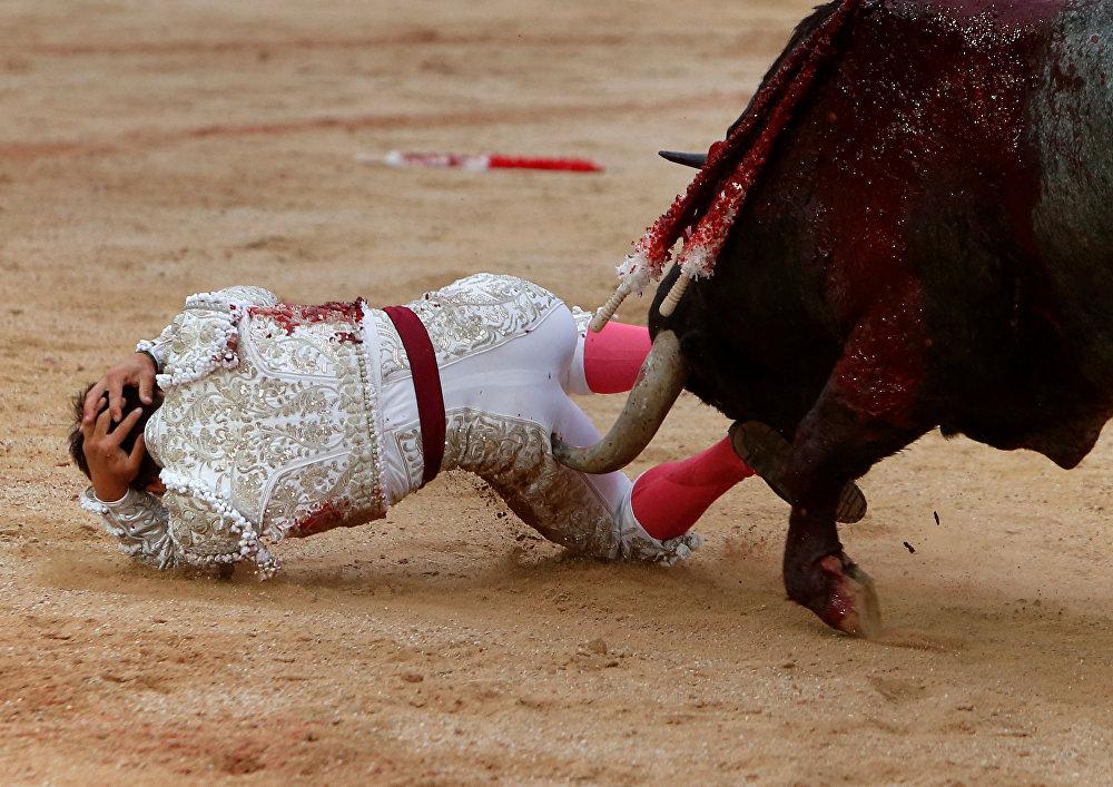 Тореадор (Испанияда - бука менен кармашуучу киши) Гонсало Кабальеро Памплонадагы Сан-Фермин фестивалында. Салтка айланган бука менен жарышуу оюнуна 16 миңге жакын адам катышты