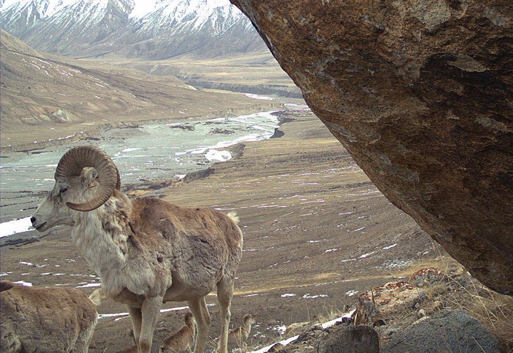 Дикие животные природного заповедника Сарычат-Ээрташ