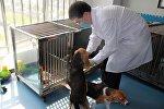 Сотрудники китайской компании Sinogene представили миру первую генномодифицированную клонированную собаку породы бигль по кличке Лун Лун.