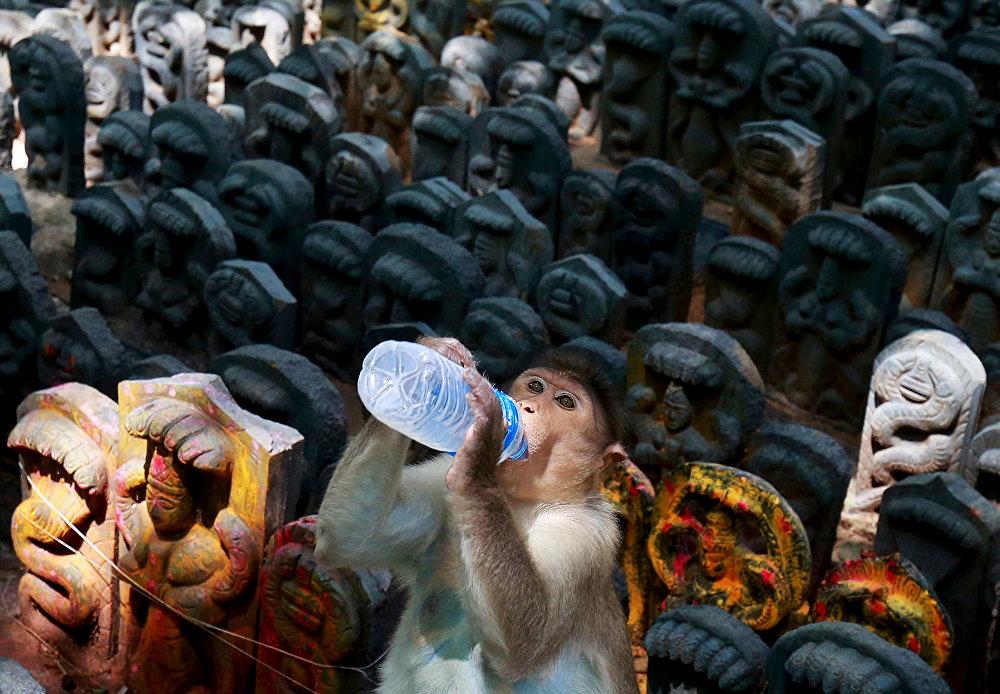 Фестиваль Наг Панчами в Индии