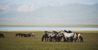 Лето в Нарыне: полеты над Сон-Кулем, экстрим на реке и охота с соколом
