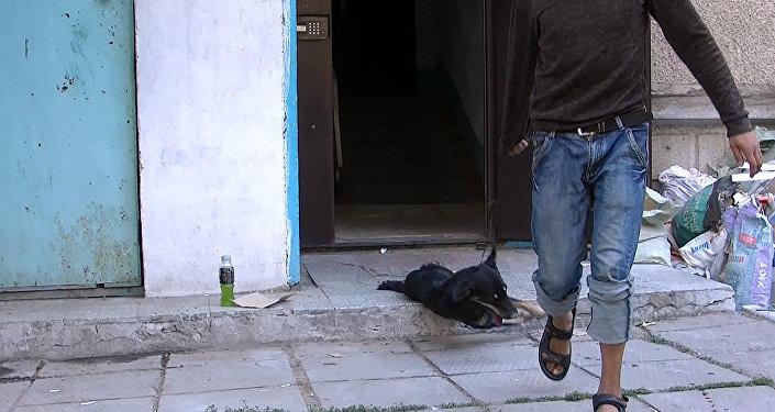Вонь, 14 собак и злые соседи — видеорепортаж из квартиры бишкекчанки