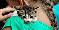 Девочкас котенком. Архивное фото