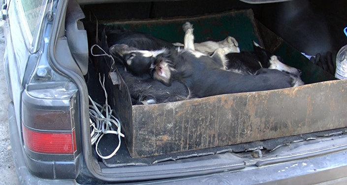 Собаки 75-летней женщины, живущей на восьмом этаже улиц Ибраимова и Токтогула