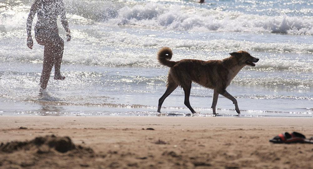 Собака на побережье моря. Архивное фото