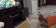 Даже животные полюбили Despacito — собака требует продолжения песни