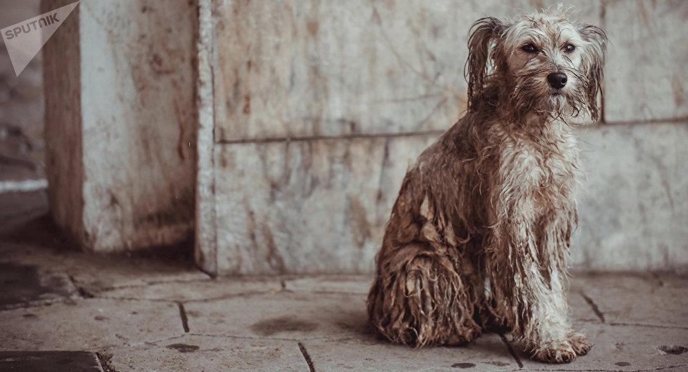 Бездомная собака. Архивное фото