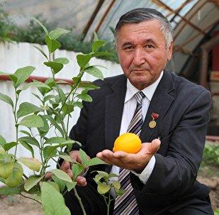 Директор образовательного центра имени Алишера Навои в Джалал-Абаде Мамасали Кадиров в теплице при учреждении