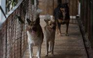 Собаки. Архивное фото