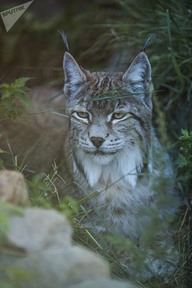Реабилитационный центр для диких животных в горах близ села Ананьево