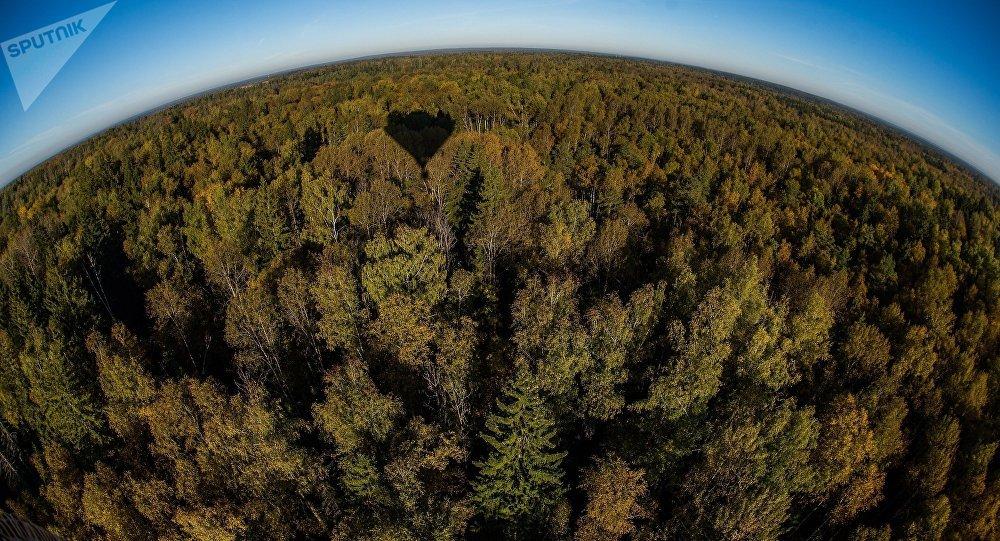 Пропавшая вчелябинском лесу 3-х летняя девочка найдена живой