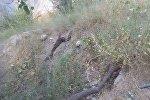 Баткен облусундагы Кожешкен дарыясынын түштүк тарабындагы аймакта жер көчкү жаракалары пайда болду