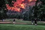 Жогору жагында токой алоолонуп күйүп жатса да бейкапар гольф ойноп жүргөн америкалыктар