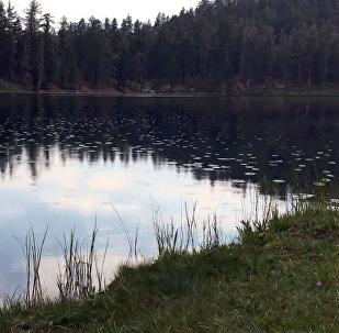 Озеро реагирует на крик человека — вирусное видео появилось в Сети