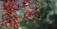 Перец красный острый. Архивное фото