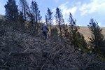 Ысык-Көлдүн Чоң-Ак-Суу капчыгайында беш гектардагы куураган чөп күйүп жатканын ӨКМдин маалымат кызматы