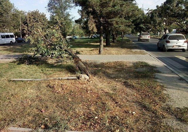 В микрорайоне Улан-2 ЧП: упали дерево и столб