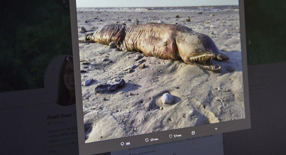 Снимок с микроблога Twitter пользователя Preeti Desai. Загадочное морское существо с острыми зубами