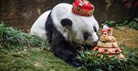 Басы аттуу дүйнөдөгү эң кары панда