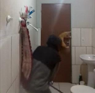 Крыса до смерти напугала кота и его хозяина — смешное видео
