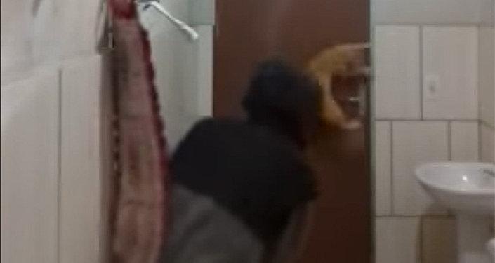 Девушка угодила вяму иметлой пробовала отбиться от большущей крысы