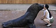 Шоу морских животных в аквапарке в Йокогаме. Архивное фото