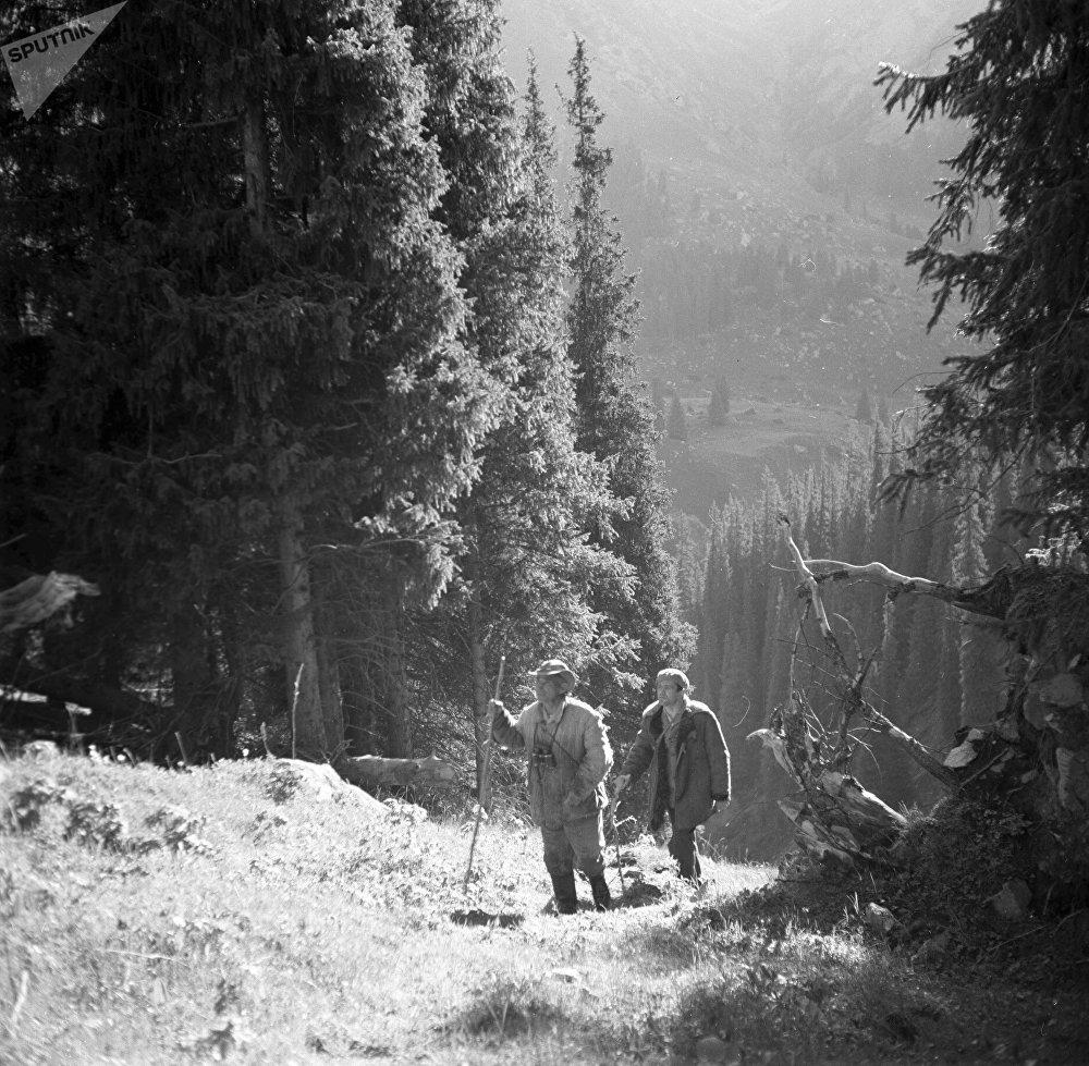 Ысык-көлдүк корукчулар 1988-жылы токойдогу карагайларды текшерип жүрөт