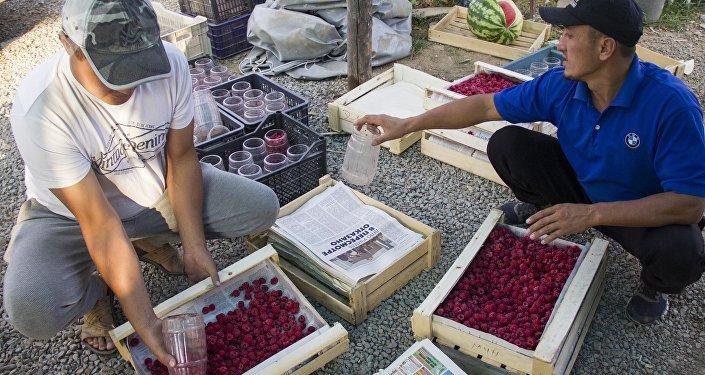 Малиновый бизнес в Чуйской области