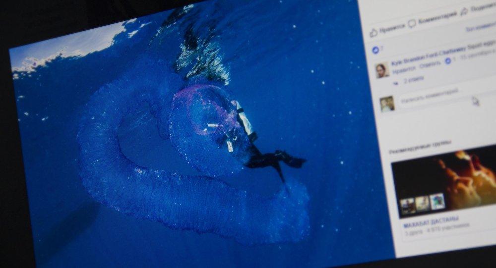 Снимок с социальной сети Facebook пользователя Abc Scuba Diving Port Douglas