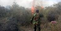 На Иссык-Куле горели сухотравье и камыши — видео с берега озера