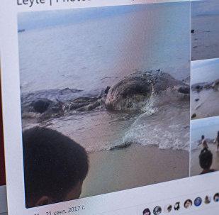 Десятиметровая туша морского животного найденная на берегу острова Лейт (Филиппины), фото со страницы Twitter CNN Philippines