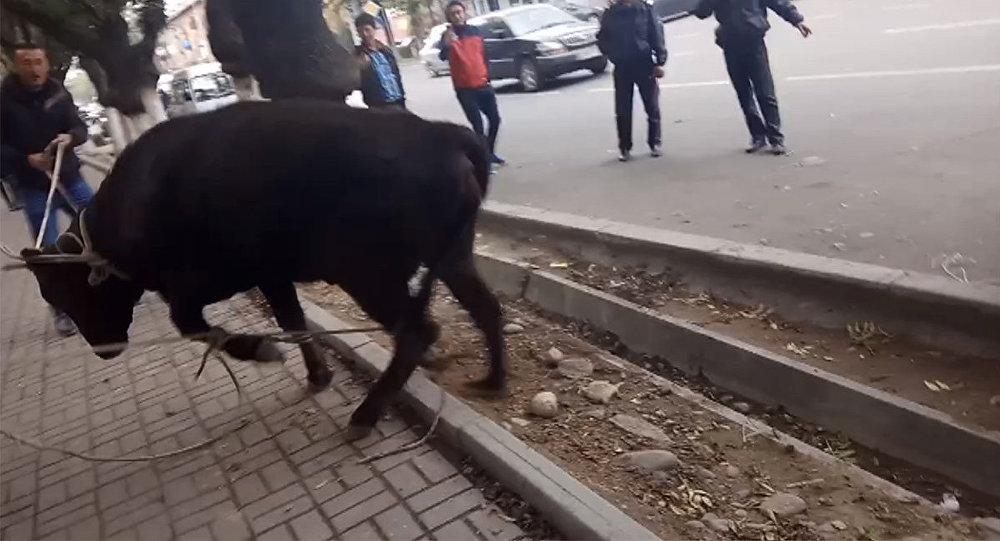 Вцентре Бишкека случилось необычное «ДТП»: корова сбила женщину