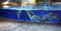 Океанариумдагы дельфиндер тыйын чычкандарга таң калганда. Видео