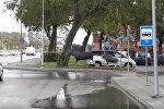 Даже лоси идут по пешеходному переходу — видео из Литвы