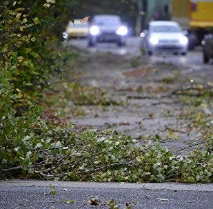 Упавшие от сильного ветра ветви деревьев. Архивное фото
