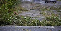 Упавшие ветви на дорогу. Архивное фото
