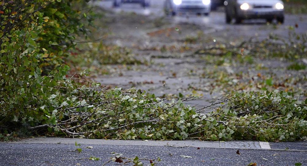 Упавшие ветви на дорогу после ветра. Архивное фото
