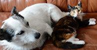 Домашние питомцы, собака и кошка на диване. Архивное фото
