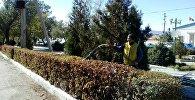 Балыкчы шаарындагы Жашылдандыруу жана көрктөндүрүү муниципалдык ишканасынын кызматкери Сымбат Бараканова