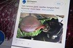 Twitter микроблогунун MSN Singapore каналынан алынган сүрөт