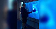 Разбившийся аквариум с акулой едва не довел мужчину до инфаркта — видео