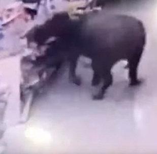 Буйвол напал на людей и устроил погром в китайском супермаркете — видео